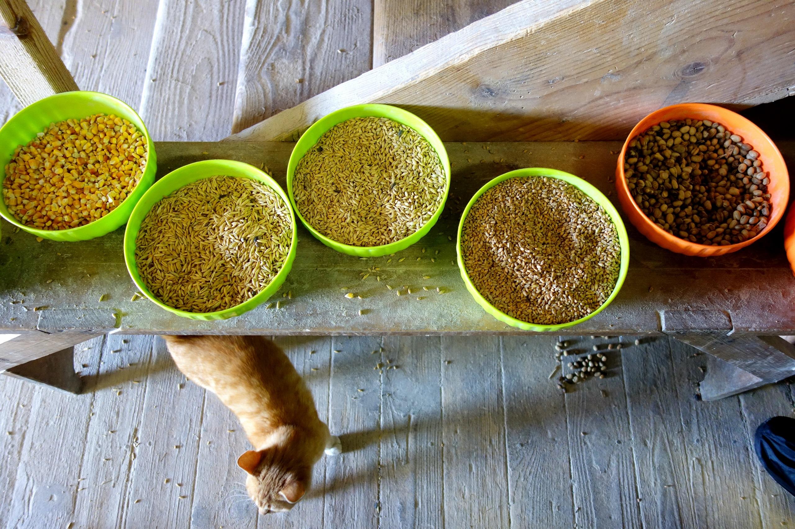 Mieszanki zbóż i kot z Farmy Vychodnej