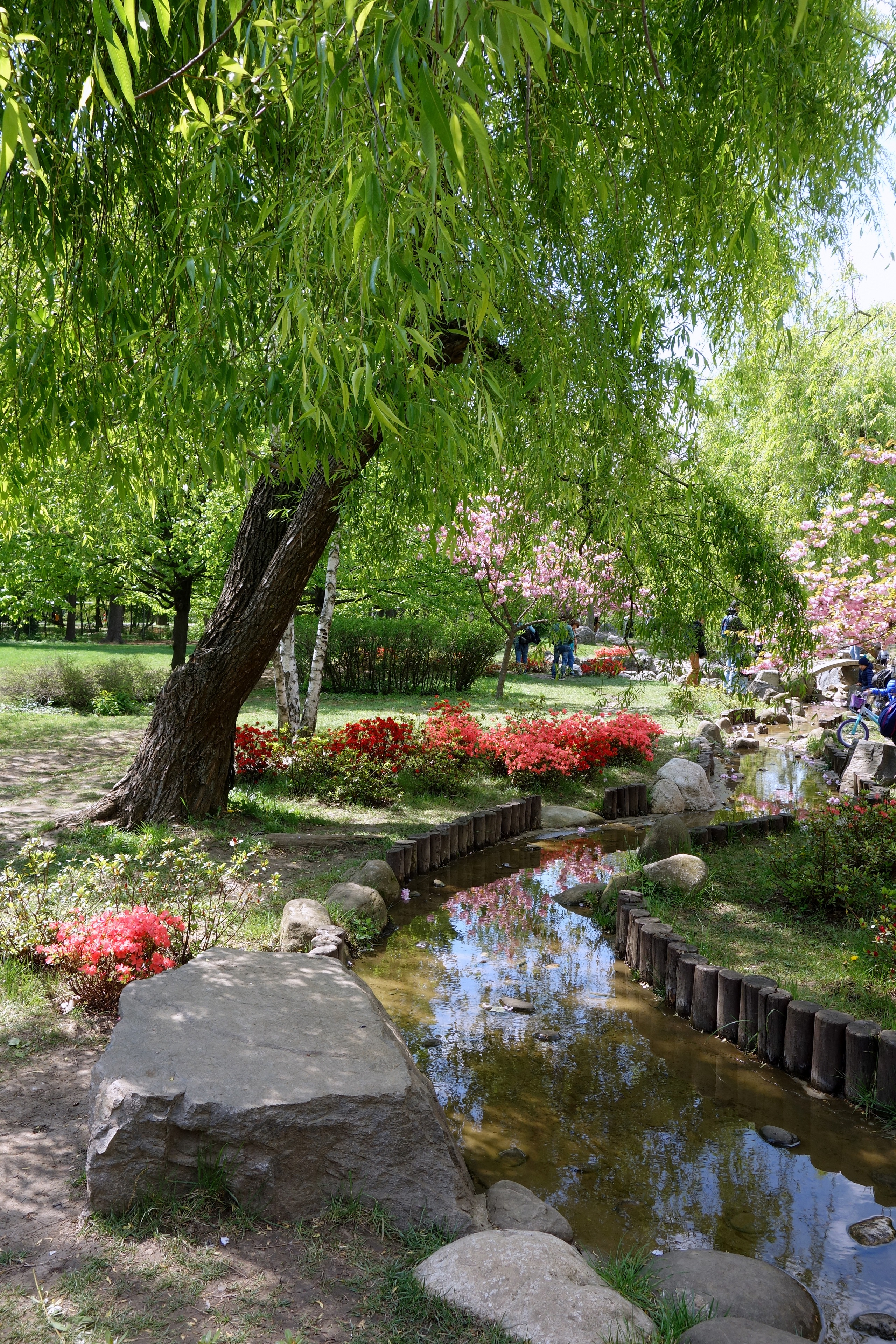 Piękny Japoński Ogród w Parku Herăstrău - Rumunia, Bukareszt