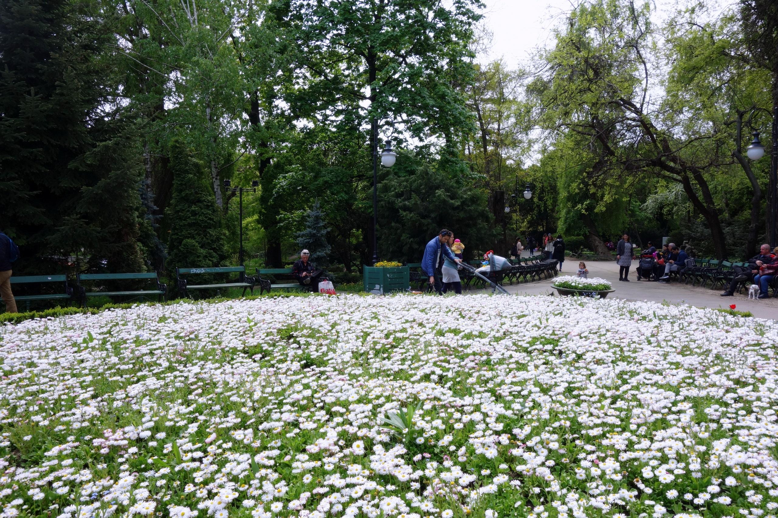 Ogród Cişmigiu tętni życiem - Rumunia, Bukareszt