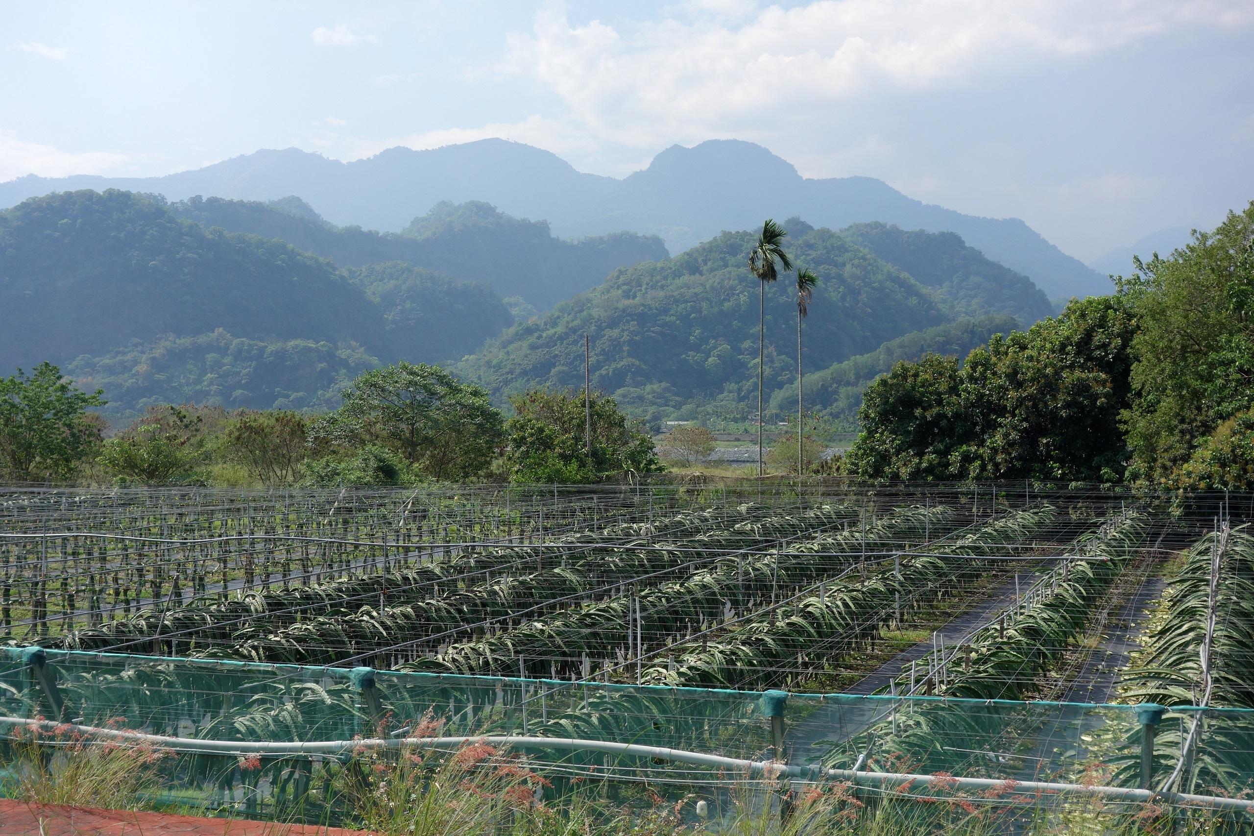 Przydrożny widok, jeden z wielu na Tajwanie