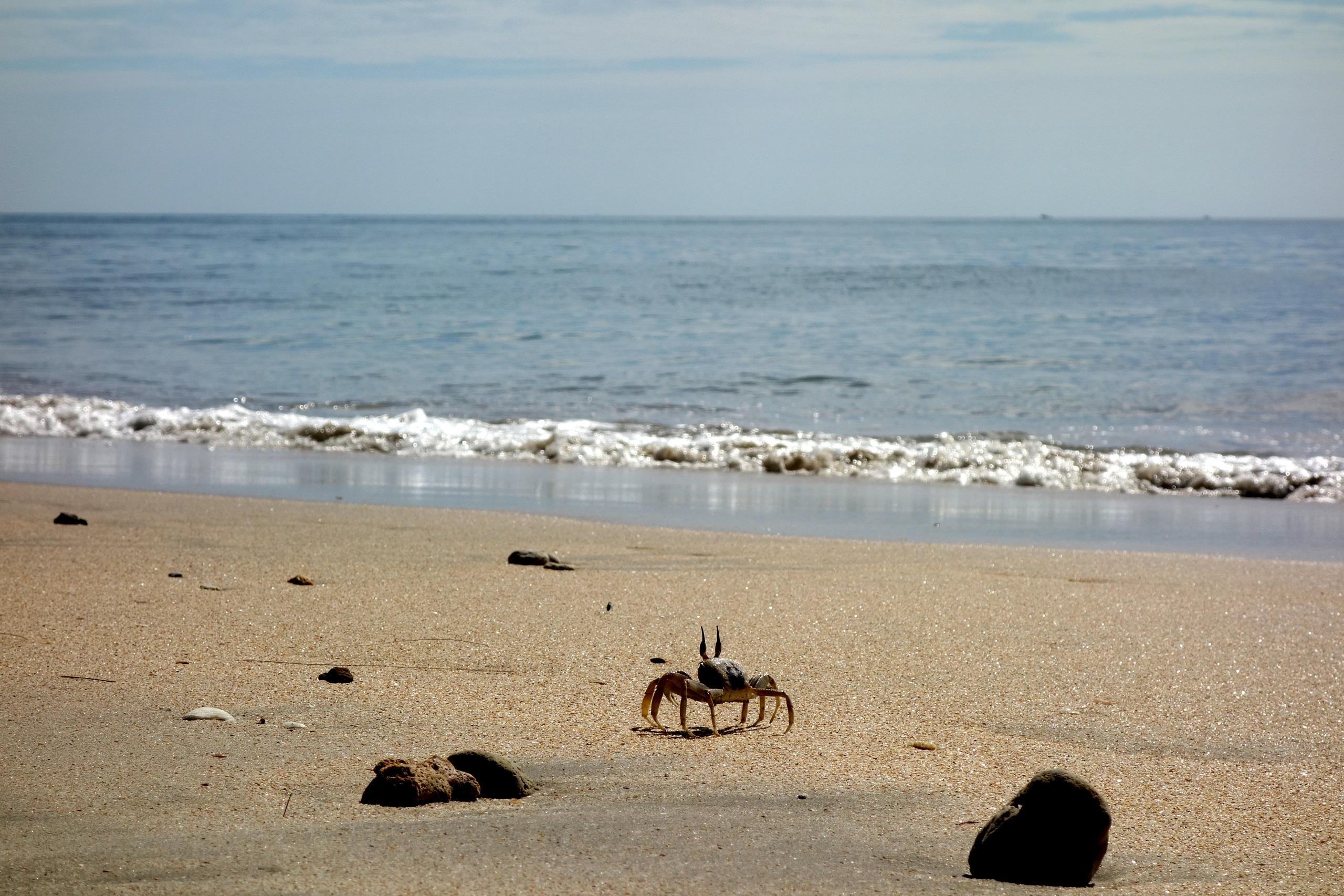Wyspa Koh Jum - Tajlandia - mieszkaniec wyspy Pan krab :)