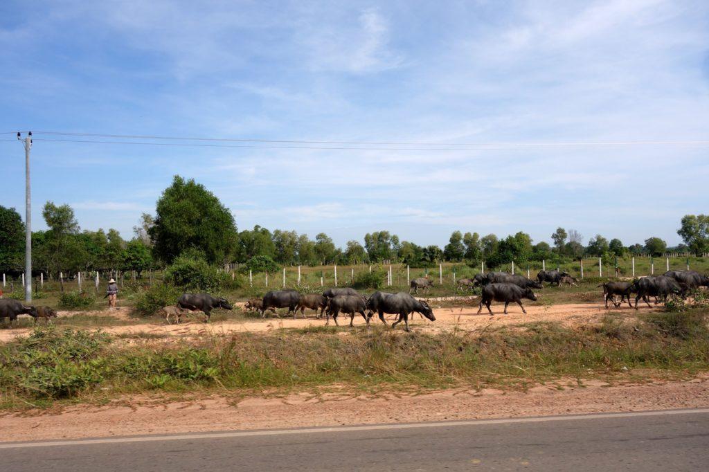 Okolice Siem Reap - Kambodża