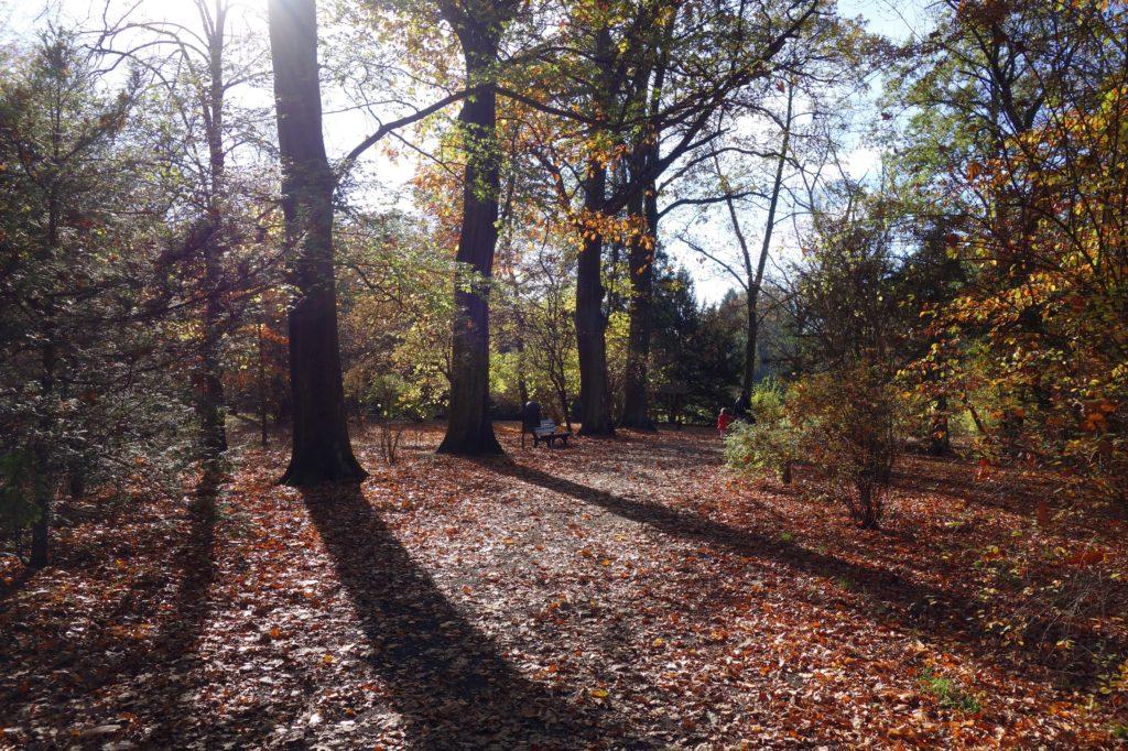 Park Szczytnicki jesienią - Wrocław