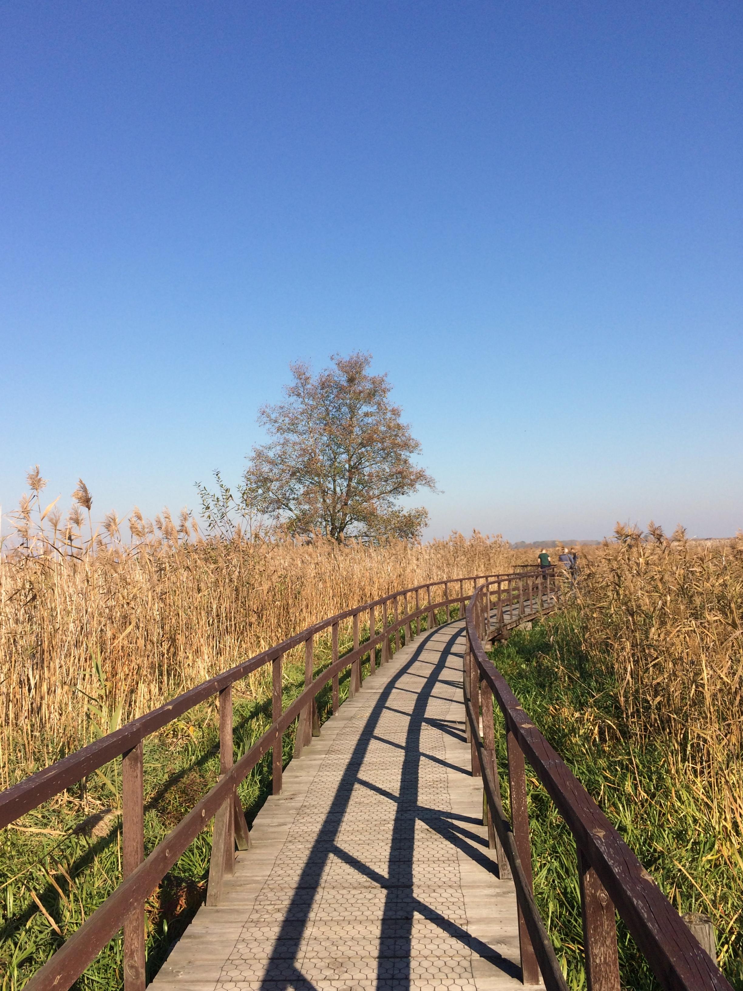 Kładka wśród bagien (kładka koło Kurowa) - Kładki na Podlasiu